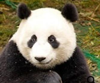 Endangered Animals Powerpoint Presentation