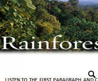 The Rainforest Song Worksheet