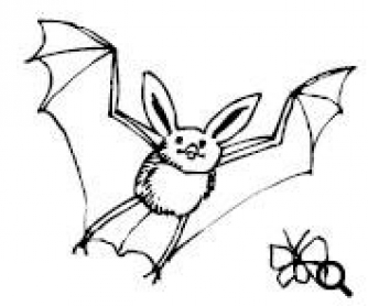 Bats: Reading Worksheet