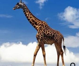 Wild Animals Descriptions