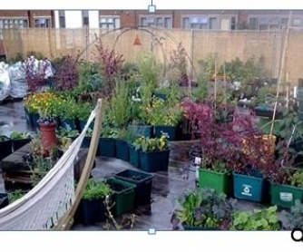 The Supermarket Growing Food on its Roof: Newspaper Article
