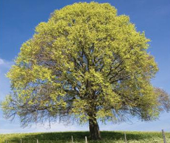Top 7 Ways to Celebrate Arbor Day with Your ESL Students