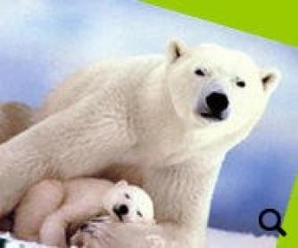 Endangered Species 2010 Worksheet [POWERPOINT]