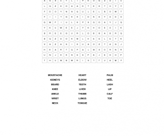 Parts of the Body Word Search