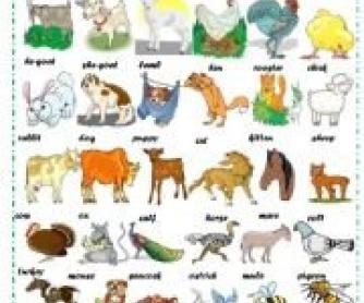 Farm Animals: Crossword puzzle