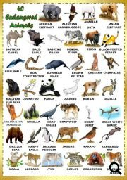 Printables Endangered Species Worksheets endangered species worksheet