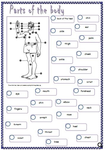 Body Parts Worksheet Advanced Ora Exacta