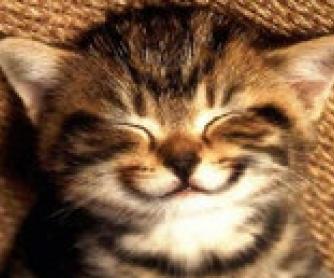 Smile: Reading + Song Worksheet [Smile Song Glee Version]