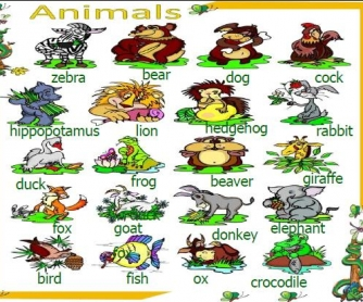 Animals PowerPoint Presentation