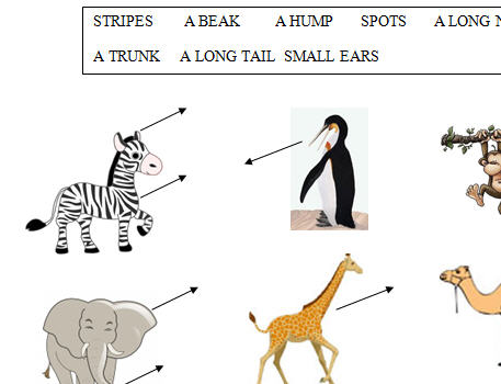 Animal Body Parts Worksheet