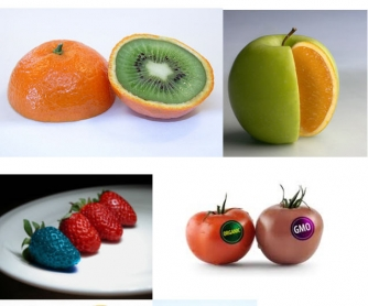 GM Foods: Pictures for Description and Discussion