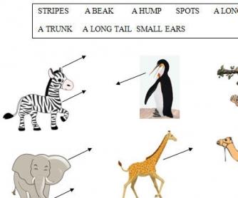 Animal Body Parts Worksheet