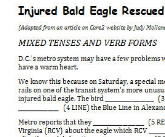 Injured Bald Eagle Rescued (Mixed Tenses & Verb Forms)