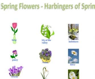 Spring Flowers: Harbingers of Spring