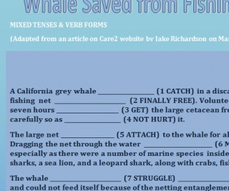 Whale Saved From Fishing Net [Mixed Tenses & Verb Forms]