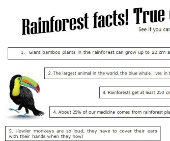 Rainforest Facts: True or False?