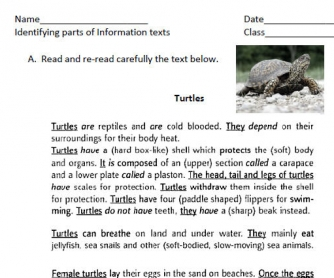 Turtles: Identifying Parts Of Information Text