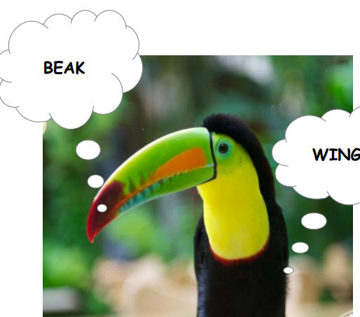 A Funny Way to Teach about Animals: The Iguana and Toucan Song