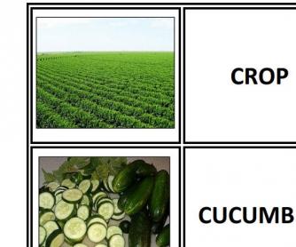 Food Idioms Part 2
