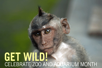 Get Wild: Celebrate Zoo and Aquarium Month