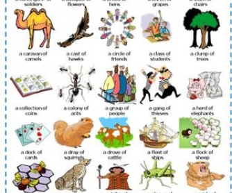 Collective Nouns: Picture Dictionary