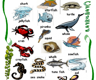 Sea Creatures Worksheet