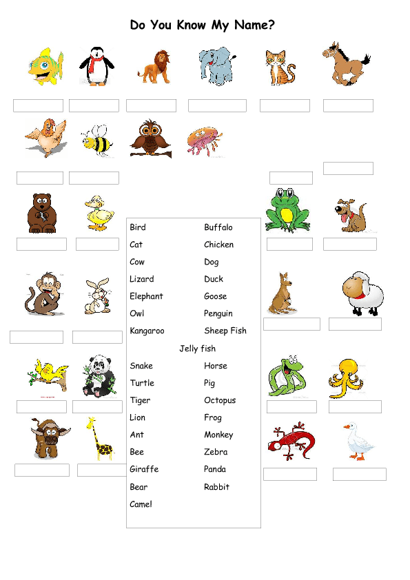 Collective Names for Groups of Animals