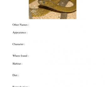 Snake Fact Sheet Template
