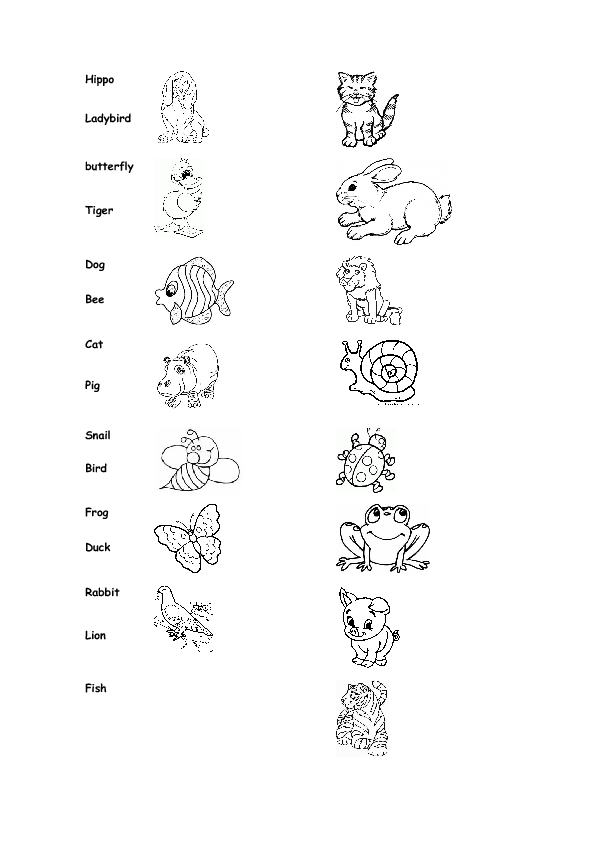 Animals Amp Insects Worksheet