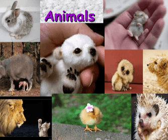 Animals Presentation