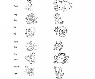 Animals & Insects Worksheet