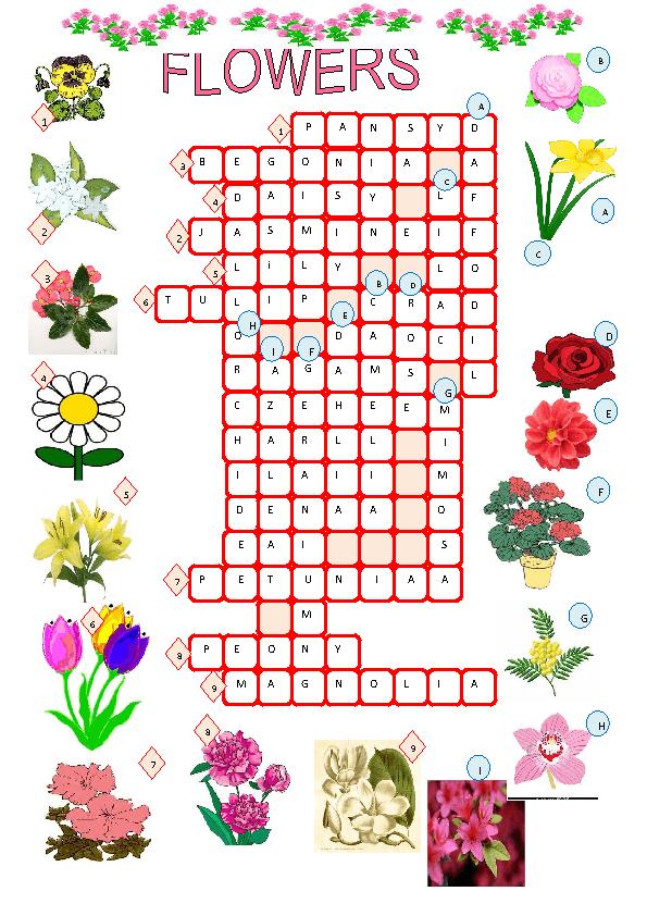21 Best Garden Flower Crossword Clue