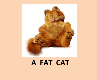Days of the Week with a Fat Cat