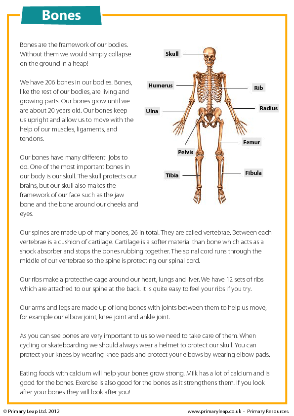 About Bones Reading Comprehension – Bones Worksheet