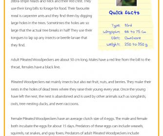 Woodpecker - Reading Comprehension