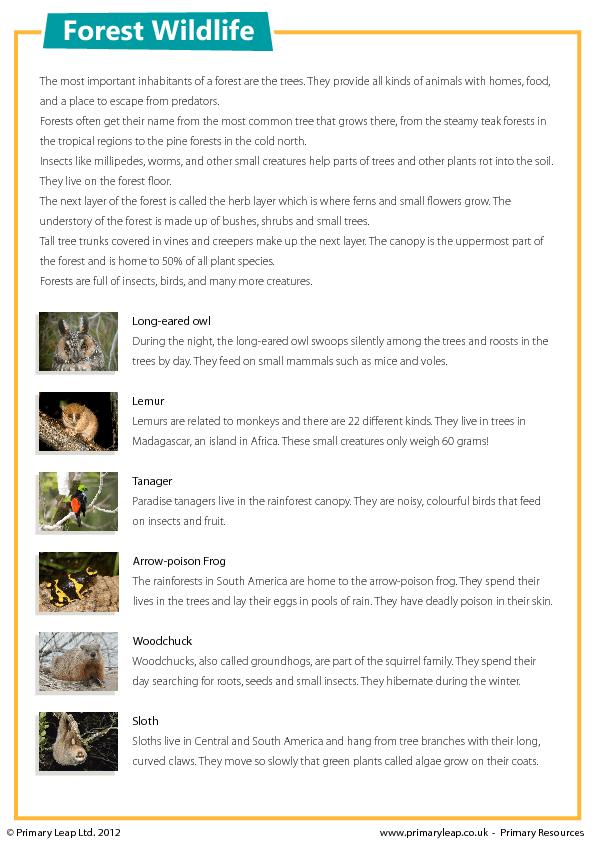 Forest Wildlife Reading Comprehension