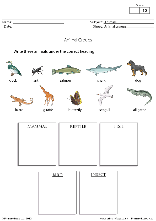 1374496980animalgroupspng – Reptile Worksheets