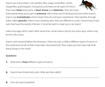 Insects - Reading Comprehension