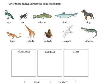 Animal Groups