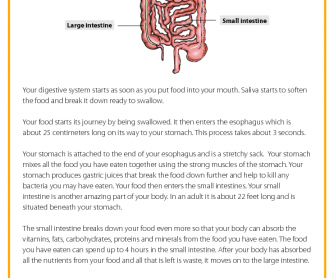 The Digestive System - Reading Comprehension