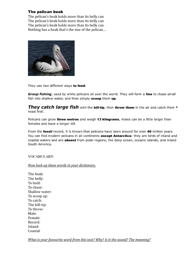 Worksheet The Pelican Beak Song – Fossil Record Worksheet