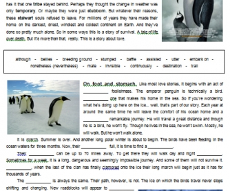 Movie Worksheet: March of the Penguins