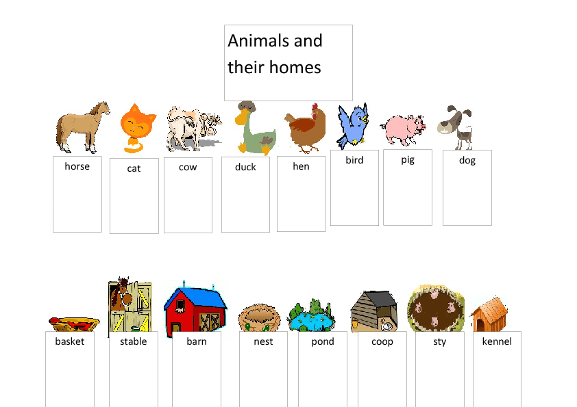 Animals and Their Homes