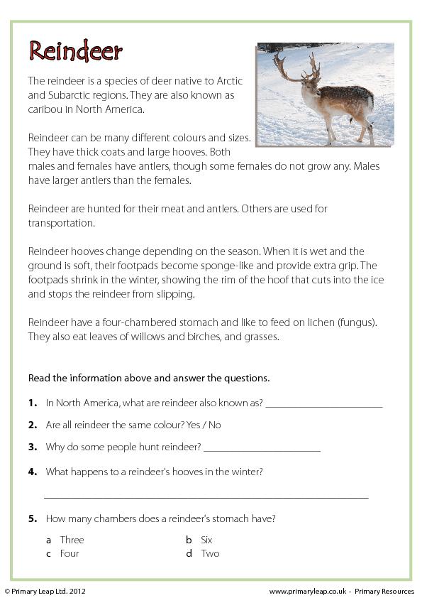 christmas comprehension reindeer. Black Bedroom Furniture Sets. Home Design Ideas