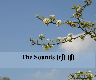 The Sounds [tʃ] [ʃ]