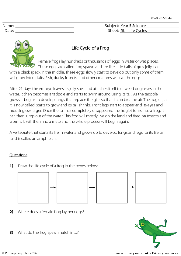 Comprehension Life Cycle of a Frog Questions – Frog Life Cycle Worksheet