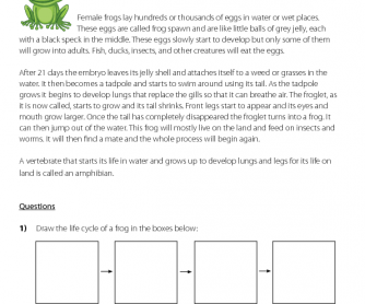 Reading Comprehension Life Cycle Of A Frog Questions