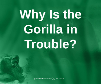 Why is the Gorilla in Trouble; Paragraph Writing