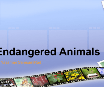 Endangered Animals PPT