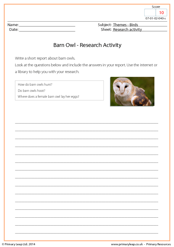 Activity - Barn Owl